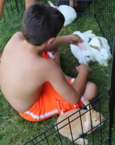 young boy plaing with rabbits